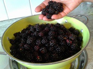 The Blackberries collected and rinsed