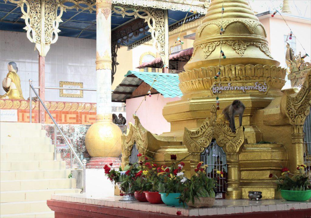 Monkeys, Bagan, Mnyamar,