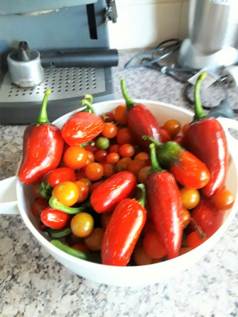 tomatoes, peppers, Melbourne, home grown,